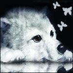 straywolf